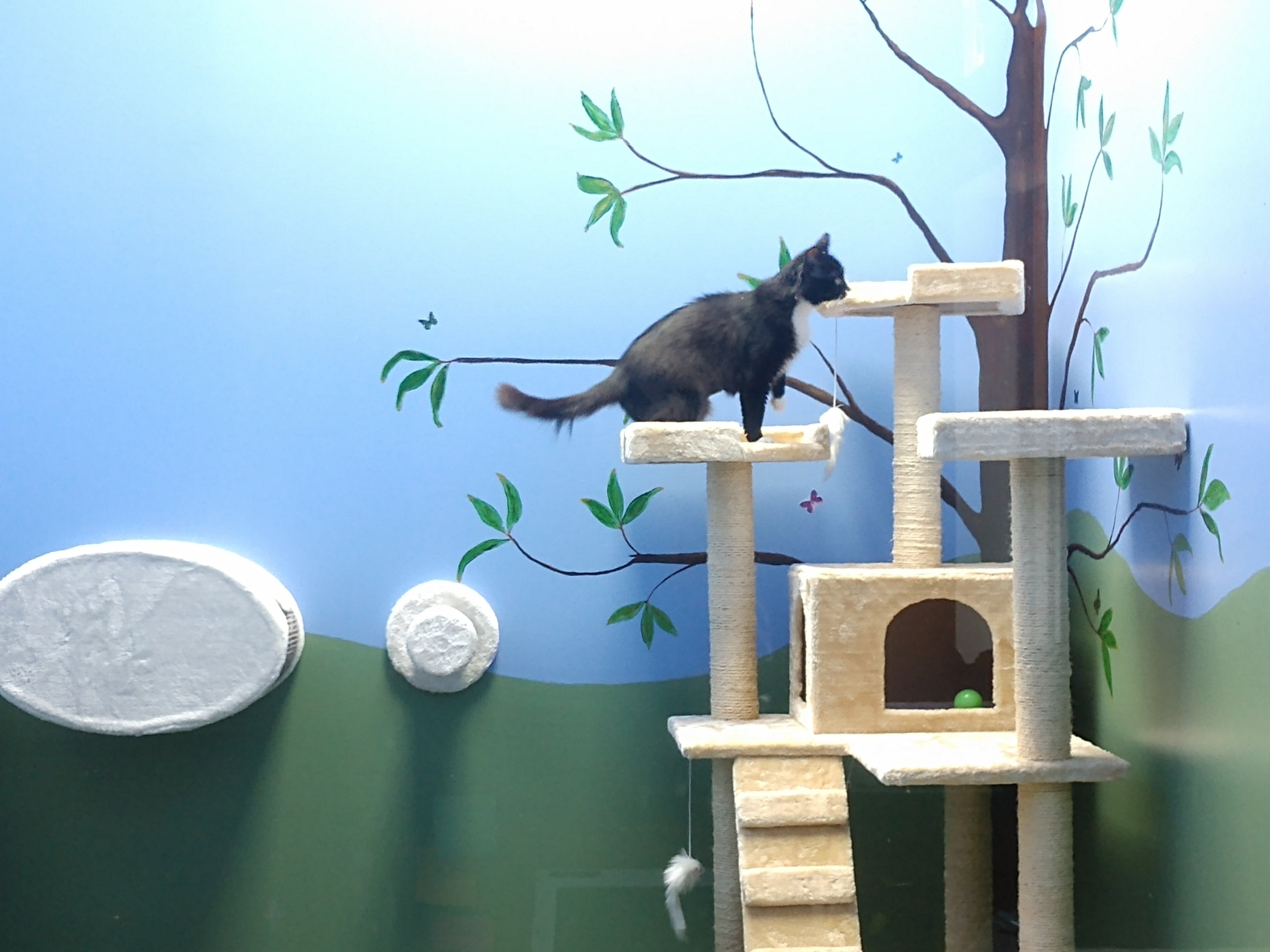 A black and white cat playing in the cat play room
