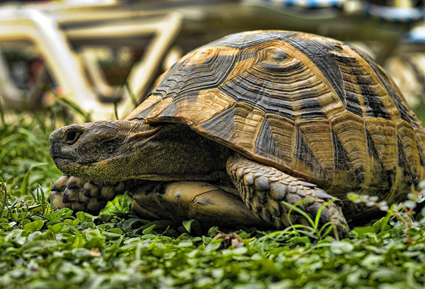Reptile Veterinarian in Seneca, SC